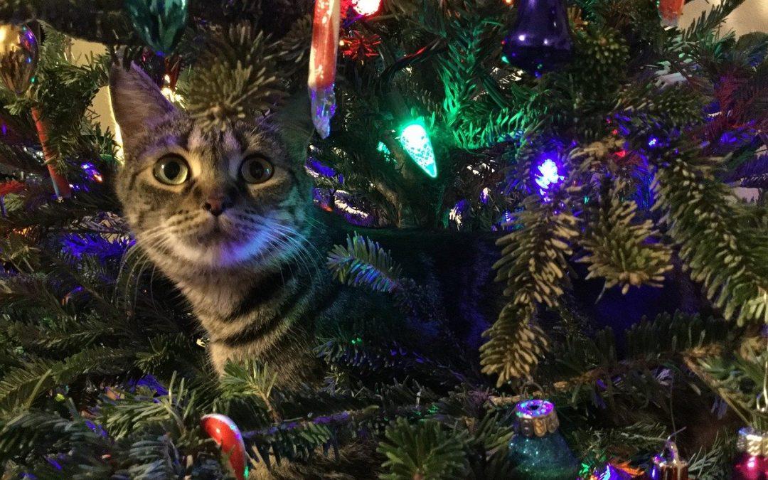 Las mascotas y la navidad