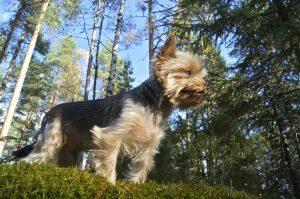 Desparasitación externa de perros y cachorros