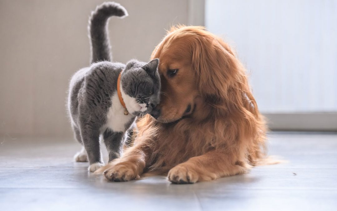 ¿Qué es la insuficiencia renal en perros y gatos?