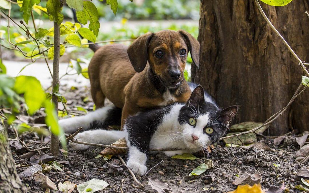 Alergias en Perros y Gatos (III)