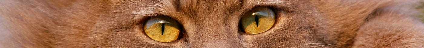 Cirugía Veterinaria para perros y gatos