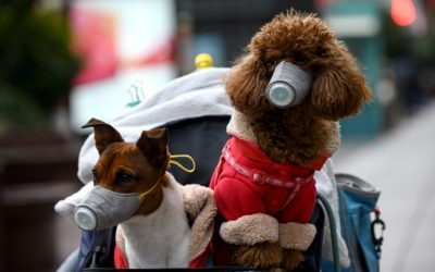Coronavirus y las mascotas ¿Qué sabemos?