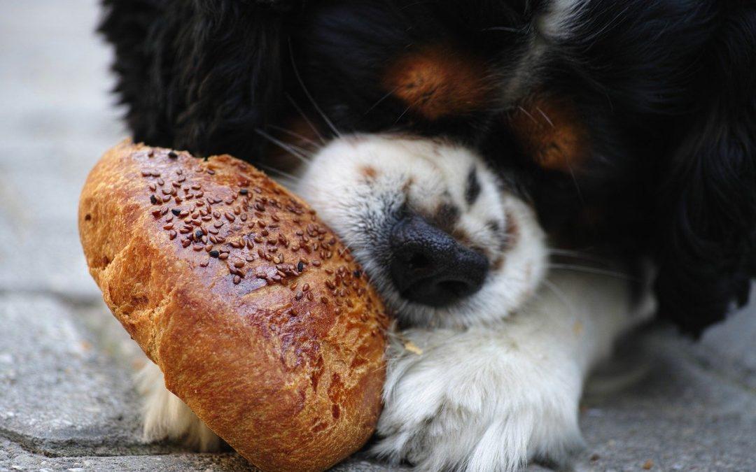 Intoxicaciones: ¿Mi mascota se ha comido algo que no debe?