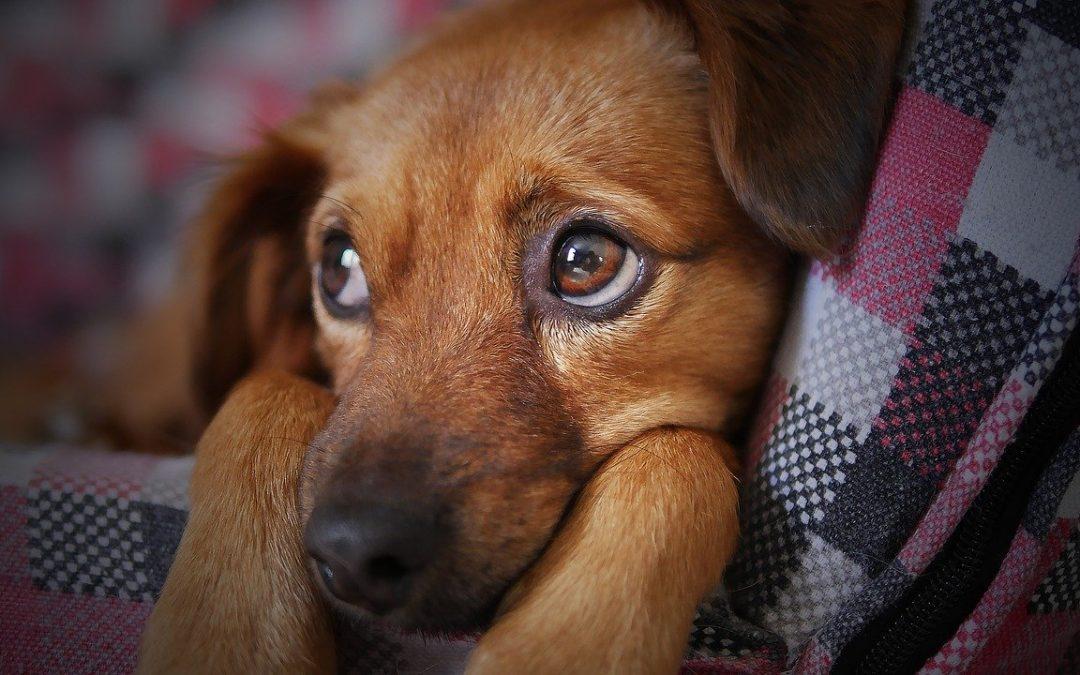 ¿Cuándo acudir al veterinario en estado de alarma?