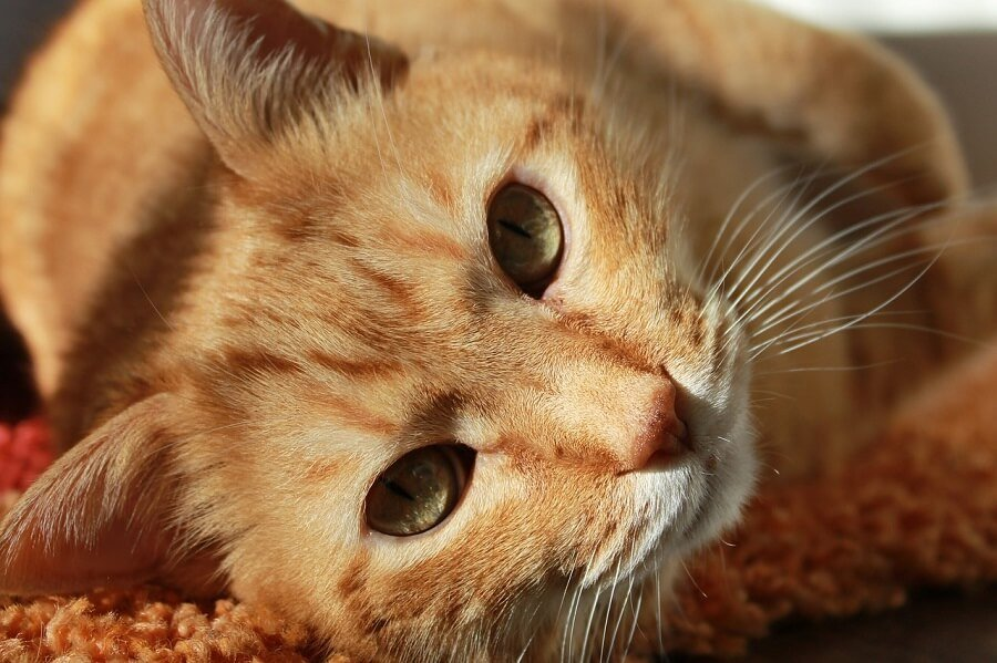 Reconstrucción Facial de gata atropellada.