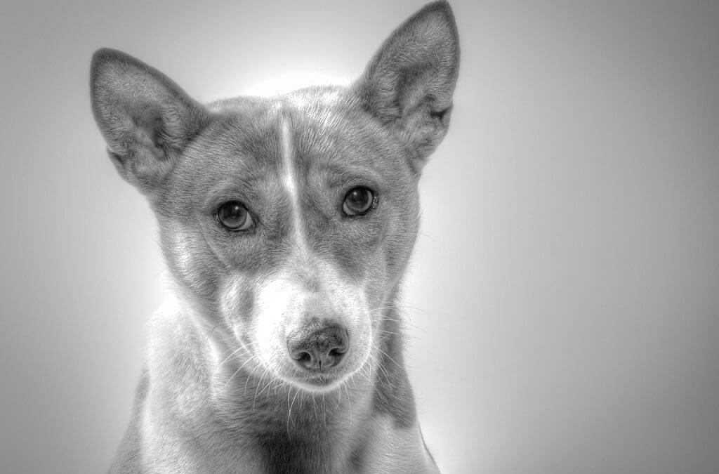 Guía para propietarios de la gestación y parto en la perra y la gata. 20 puntos clave a recordar.