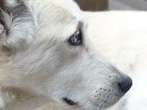 Campaña de vacunación antirrábica perro: Vacunas contra la rabia