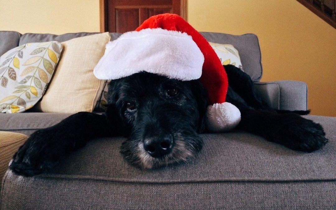 La navidad y nuestras mascotas