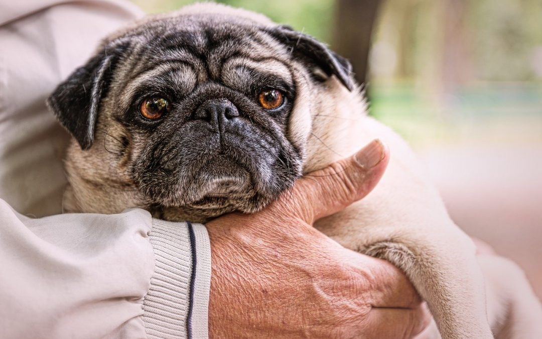 Mascotas y Familia: Nuestros mayores
