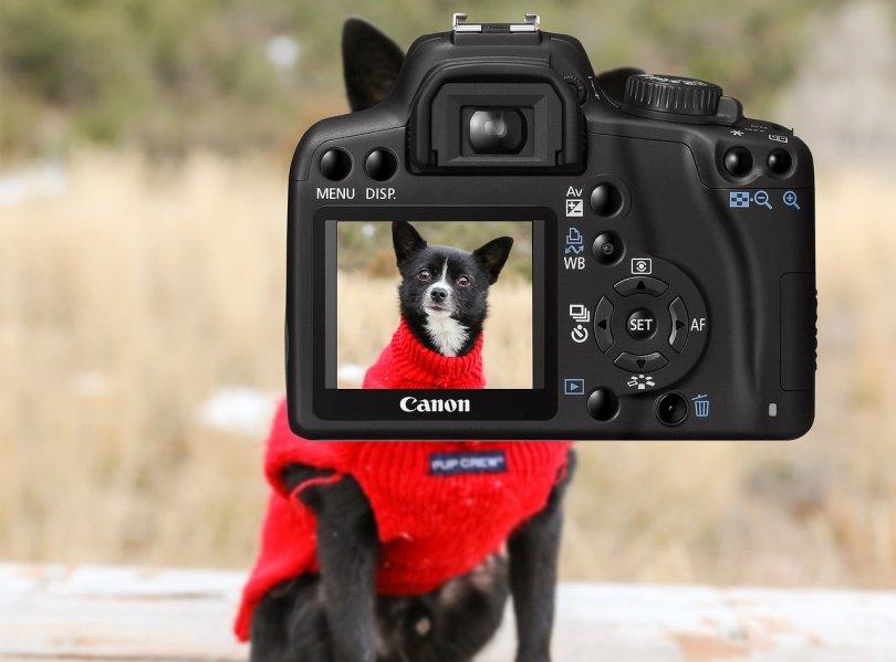 Arrancamos el año con un concurso de fotografía para perros