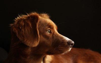 Tumores de mama en perras y gatas
