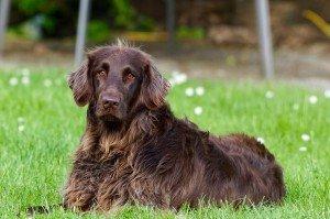 Mastocitoma canino: Diagnóstico y tratamiento para tu perro